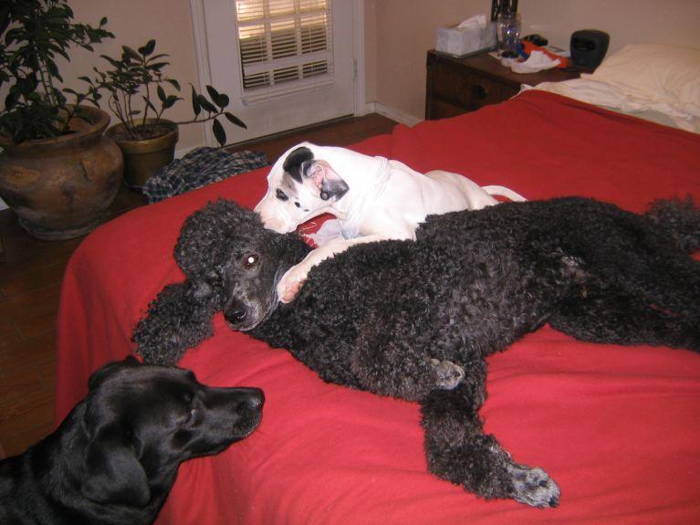 20060121-Bog, Ellie, Lily  (3)
